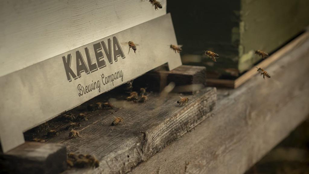 Korpikuusikon Hunaja Oma mehiläispesä